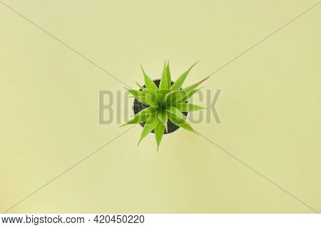 Top View Or Flat Lay Green Artificial Office Plants On Pastel Yellow Office Desk Or Office Table Bac