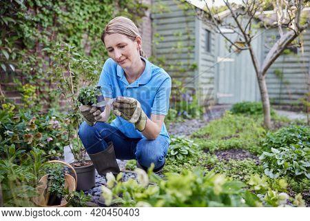 Mature Female Landscape Gardener Planting Plants In Garden Reading Instructions On Care Label