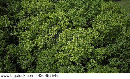 Drones Eye View - Forrest From Above, Aerial Top Down Green Forest Background, Caucasus, Russia.