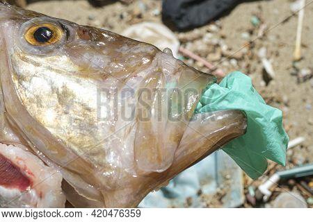 Ocean Fish Dead Eating Plastic Rubber Disposable Glove On A Debris Polluted Sea Habitat