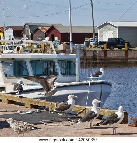 Seagulls on the wharf and lobster boats in rural Prince Edward Island, Canada.