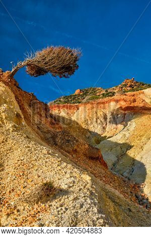 Bent tree on hill slope with colorful rocks. Milos island, Greece