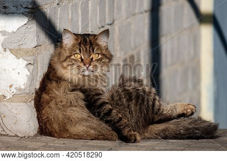 The Cat Sitting Against The Wall Looks Like A Person Into The Frame. Close-up Of A Cat Sitting By Th
