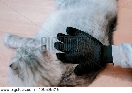 Hand In Black Glove Petting A Cat To Cleaning The Wool. Care. Animals. Clean