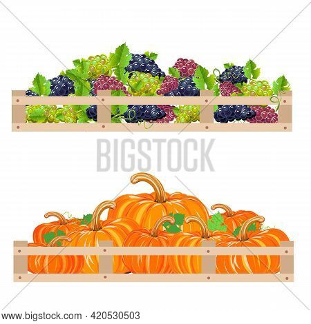 Harvest Grapes And Pumpkins Are Stacked In A Box. Autumn Harvest Set Vector Illustration On White Ba