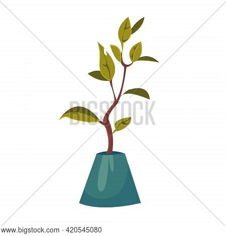 Ficus Flower In A Pot. Home Plants. Gardening At Home. Vector Illustration In Cartoon Children S Sty