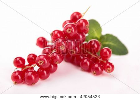 isolated red currant