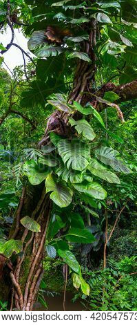 Beautiful green tropical jungle for natural background