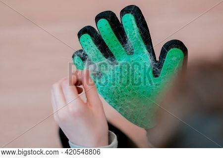 A Person Holding A Wool After Cleaning A Pet By Green Rubber Glove With Spikes. Object. Animals. Cle