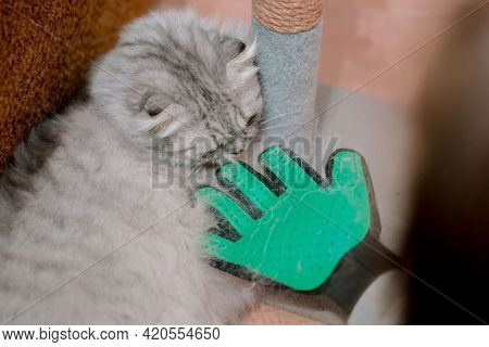 Cat Sniffs Green Glove. Combing Hair. Use. Kitten. Molting. Animal Care. Sad. Unhappy. Depression. S