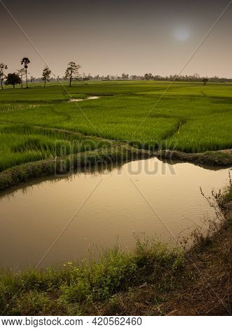 Rice Fields Asia Showing  Irrigation Channels And Manmade Reservoirs To Help With Rice Growing And P
