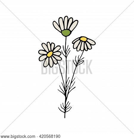 Hand Drawn Colorful Floral Element Isolated On A White Background. Sprig Of Chamomile Flowers. Doodl