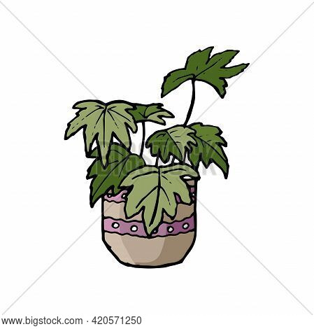 Doodle Style Home Plant. Plant With Large Leaves. Ornamental Houseplant In A Pot. Drawn By Hand. Cli