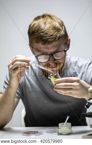 Young Bearded Biologist Geneticist In Glasses Drops Green Reagent On Plant Leaf