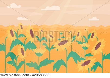 Sunflower Field Flat Color Vector Illustration. Summer Flowers In Full Bloom. Following Sun. Farmlan