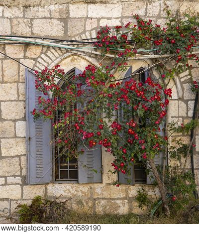 A Bush With Abundant Red Flowers, In Front Of A Typical Old Jerusalem Arched Window.