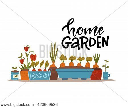 Sprouts And Seedlings Of Various Vegetable Plants In Flower Pots On A Windowsill Or Shelf . Collecti