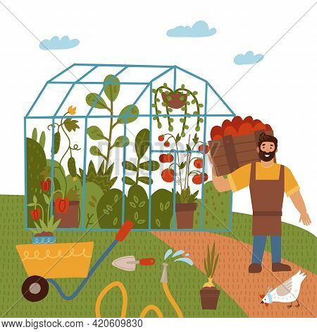 A Young Man With A Crop Of Tomato, Greenhouse Vegetables. Garden Theme. Male Farmer Growing Plants A