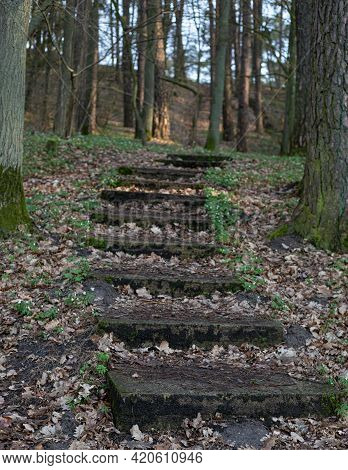 Stone Steps In The Woods (forest) Or Park Leading The Way Up