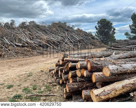A Pile Of Felled Pine Logs Piled Up On The Edge Of A Path, Wood, Pinewood Raw Material, Cut Down For