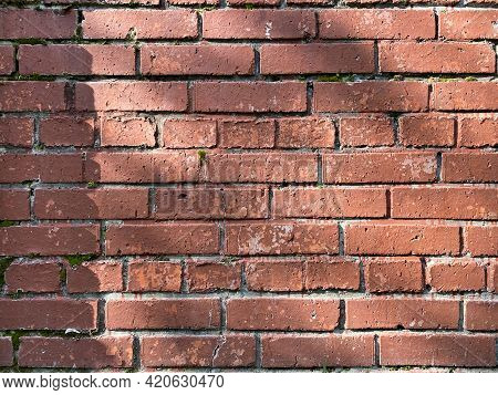 Old Red Brick Wall In Rows, Green Moss Between The Bricks. Masonry. The Wall Is Not New, It Has Smal