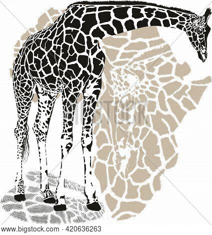 Vector Background With Giraffe Motif, Giraffe Footprints And Stylized Map Of Africa