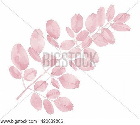 Pink Watercolour Plant Leaves. Blush Pink Branches. Moringa Leaves.