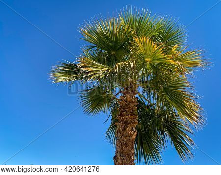 Bright Green Southern Tropical Palm Tree Blowing In The Breeze Against A Bright Clear Blue Sky