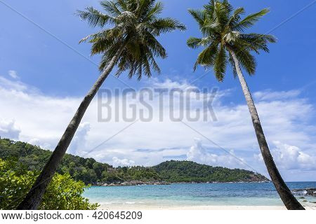 Coconut Palm Trees And Tropical Sea. Summer Vacation And Tropical Beach Concept. Coconut Palm Grows