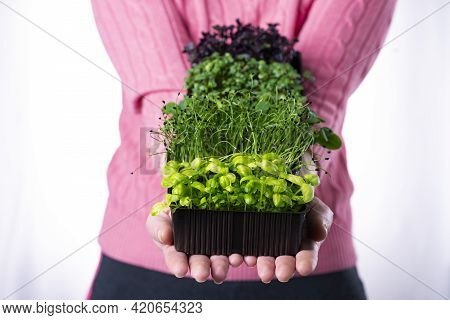 Woman In Pink T-shirt Holding A Lot Of Microgreens In Brown Trays In Her Hands, Delivery Of Microgre