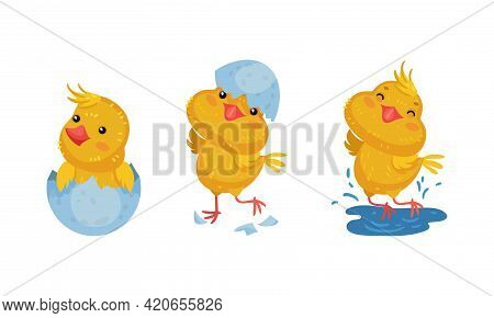 Cute Chicken Hatching From Egg And Jumping In Puddle Vector Set