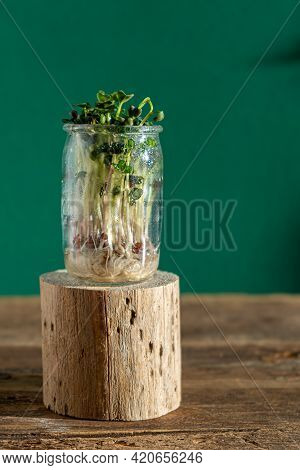 Growing Microgreen. Glass Jars With Alfalfa Sprouts, Radishes, Lettuce, Cabbage On A Wooden Pedestal
