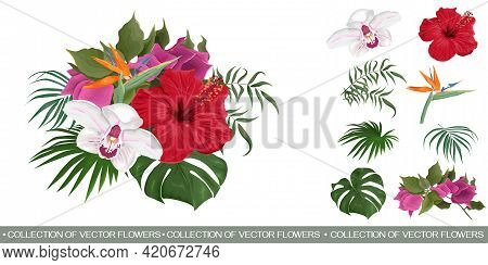 Vector Tropical Bouquet. Red Hibiscus, Strelitzia, Orchid, Bougainvillea. Flowers And Plants On A Wh