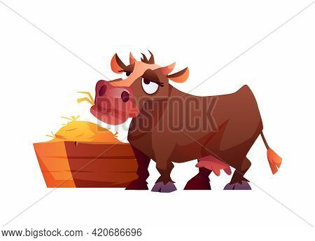 Cow Eating Hay Isolated Cartoon Farm Animal Isolated On White. Vector Illustration Of Rural Cattle E