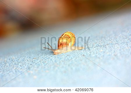 Single Snail Crawling On A Wall