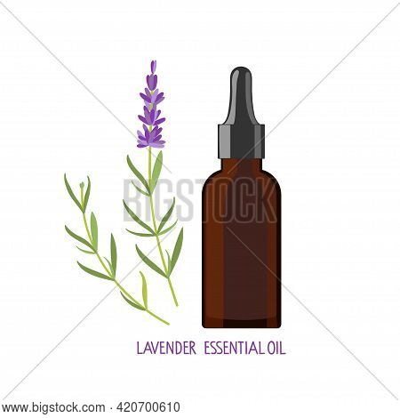 Lavender Essential Oil. Lavender Plant And Medical Bottle Of Dark Glass. Vector Flat Grass Lavender