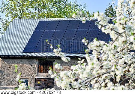 Solar Panels On Barn Roof Behind Plum Tree