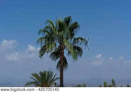 Palme Unter Einem Blauen Himmel In Màlaga Spanien Palm Tree Under A Blue Sky In Malaga Spain