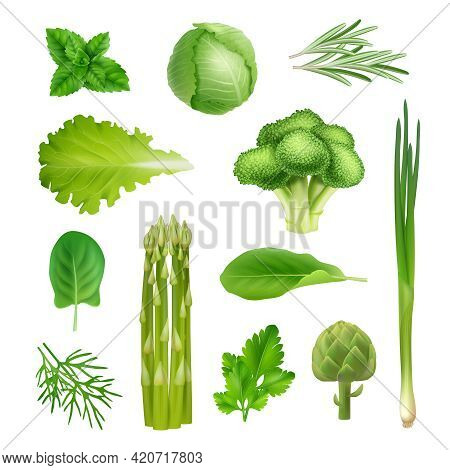 Green Vegetables. Mint Onion Salad Leaf Parsley Cabbage And Broccoli Decent Vector Organic Fresh Pro