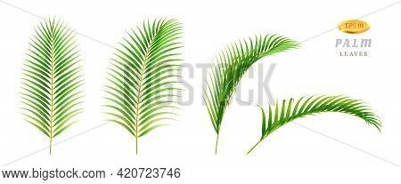 Exotic Foliage In Different Sides And Positions, Isolated Tropical Leaves Of Palm With Large Vegetat