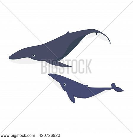 Cartoon Whale Flat Vector Illustration On Isolated Background
