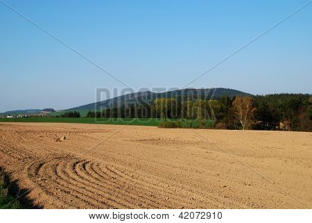 Field In The Spring