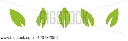 Green Leaves Set. Eco Icons, Clip Art. Isolated On White. Vector Illustration. Green Flat Leaves. Le