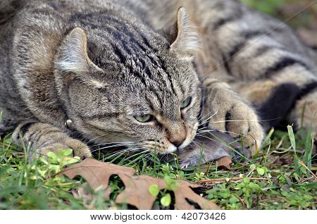 Cat With It's Prey