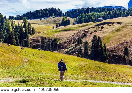 Elderly tourist with backpack travels in Tyrol. Alpe di Siusi is charming plateau in the Dolomites, Italy. Indian summer in the Dolomites. The concept of walking, ecological and photo tourism