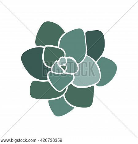 Beautiful Collection With Green Succulent Cactus Hand Drawn Top View For Decoration Design. Vector T