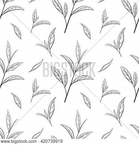 Hand Drawn Green Tea Leaf, Tips, Flush. Sketch Organic Food And Drink. Vector Illustration, Seamless