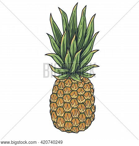 Pineapple Fresh Exotic Juicy Fruit. Summer Tropical Nature Ananas And Organic For Food Bar