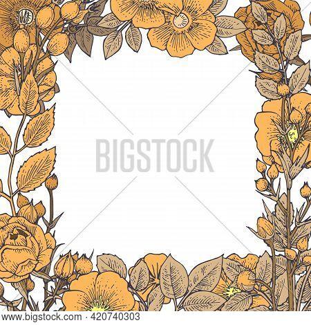 Rosehip Flowers. Seamless Frame. Background Illustration. Hand Drawing Outline. Flowering Of Garden