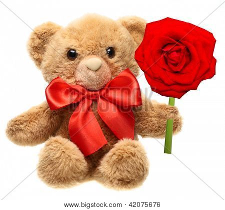 Classic teddy bear with red bow holding red rose flower isolated on white background